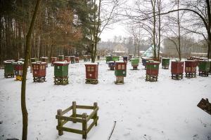 Pasieka Zimą (2)